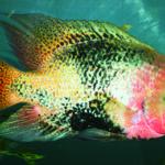 4-poisson