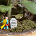 6 Robin des bois