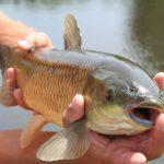 poisson capturer lors de la pêche