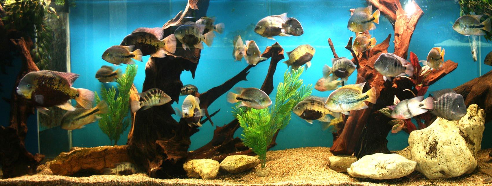 aquario-aquarium